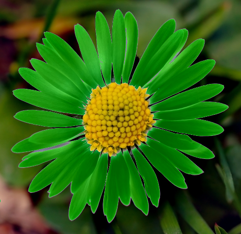 Daisy_medium_green