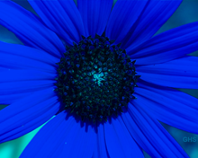 Sunflower SwapBlueAndGreenFixRed0