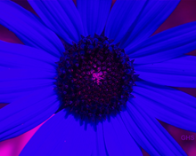 Sunflower SwapBlueAndRedFixGreen0