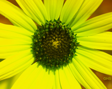 Sunflower SwapRedAndGreenFixBlue0