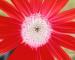 Sunflower-Invert-All-ShiftLeft