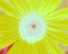 Sunflower-Invert-All-SwapBlueGreenFixRed200