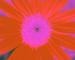 Sunflower-Invert-All-SwapBlueRedFixGreen75