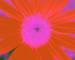 Sunflower-Invert-All-SwapBlueRedFixGreen75