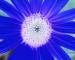 Sunflower-Invert-All-SwapRedGreen