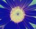 Sunflower-Invert-All-SwapRedGreenFixBlue150