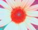 Sunflower-Invert-Blue-ShiftLeft