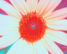 Sunflower-Invert-Blue-ShiftLeft
