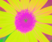 Sunflower-Invert-BlueGreen-ShiftLeft