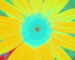 Sunflower-Invert-BlueGreen-SwapBlueGreen