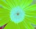 Sunflower-Invert-BlueGreen-SwapBlueGreenFixRed125