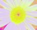 Sunflower-Invert-BlueRed-SwapBlueGreenFixRed225