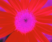 Sunflower-Invert-BlueRed-SwapBlueRedFixGreen35