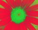 Sunflower-Invert-BlueRed-SwapRedGreenFixBlue55