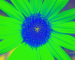 Sunflower-Invert-Green-ShiftLeft