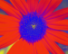 Sunflower-Invert-Green-SwapBlueGreen