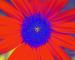 Sunflower-Invert-Green-SwapBlueGreen