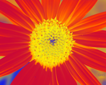 Sunflower-Invert-Red-Green