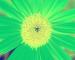 Sunflower-Invert-RedGreen-SwapRedGreenFixBlue110