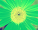 Sunflower-Invert-RedGreen-SwapRedGreenFixBlue110