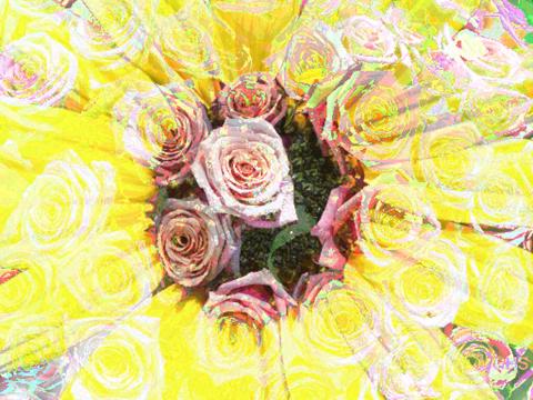 SunflowerRoses8