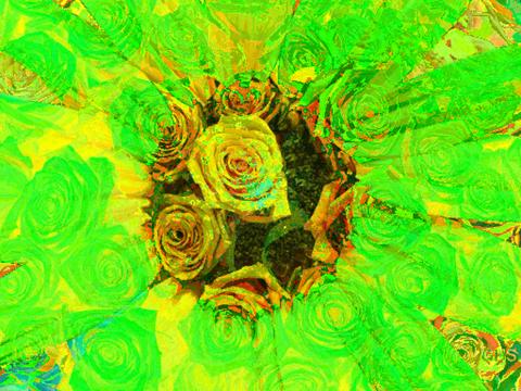 SunflowerRoses