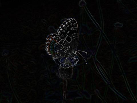 Butterfly Sobel 3 x 3 x 8