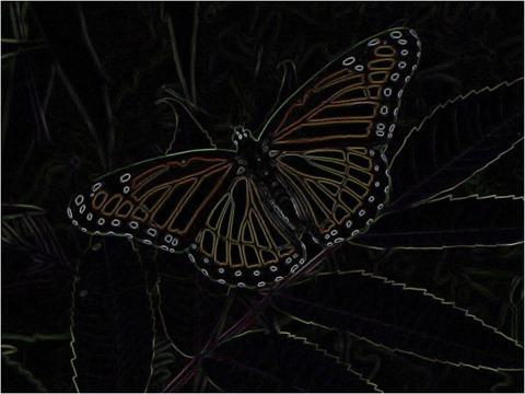 Butterfly Isotropic 3 x 3 x 4