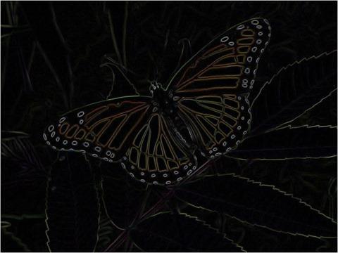 Butterfly Kirsch 3 x 3 x 4