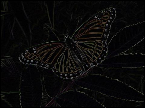 Butterfly Kirsch 3 x 3 x 8