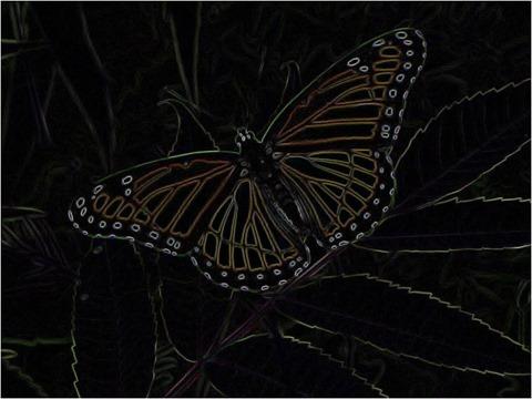 Butterfly Prewitt 3 x 3 x 4