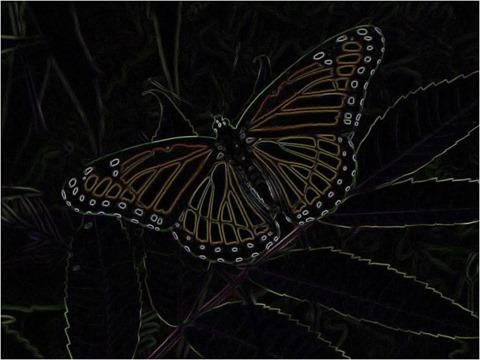 Butterfly Prewitt 3 x 3 x 8