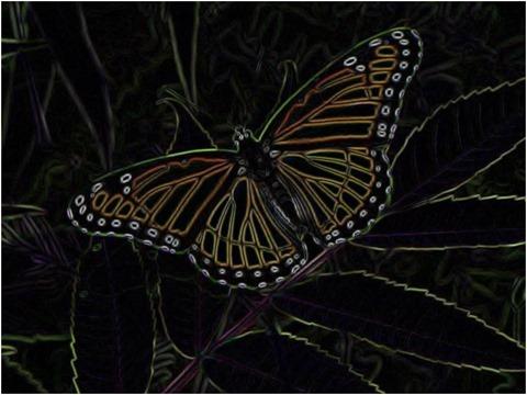 Butterfly Prewitt 5 x 5 x 4