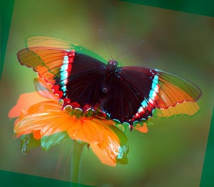 Butterfly Rotate Red 10 Green 0 Blue 0