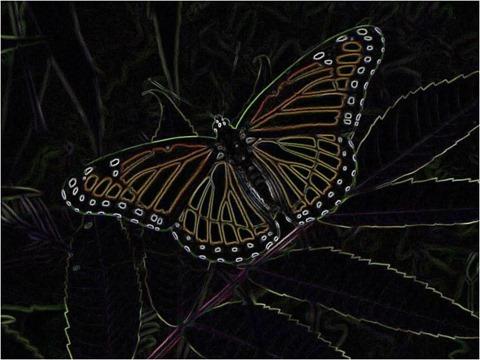 Butterfly Scharr 3 x 3 x 8