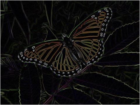 Butterfly Scharr 5 x 5 x 4