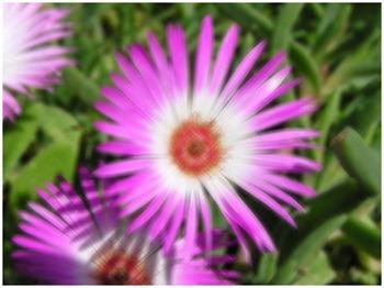 Daisy Motion Blur 9x9