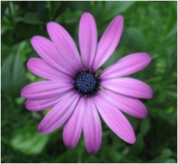 Daisy Motion Blur 5x5
