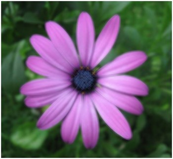 Daisy Motion Blur 7x7