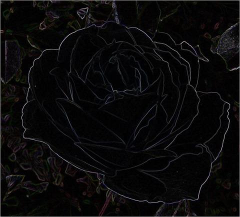 Rose Scharr 3 x 3 x 8