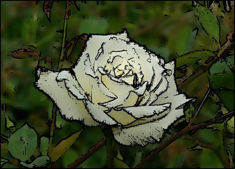 Rose Oil Painting Filter 7 Levels 20 Cartoon Threshold 20