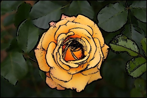 Rose Oil Painting Filter 9 Levels 25 Cartoon Threshold 25