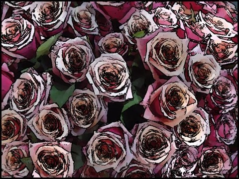 Roses Oil Painting Filter 11 Levels 60 Cartoon Threshold 80