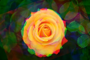 Rose Rotate Red -20 Green 0 Blue 20