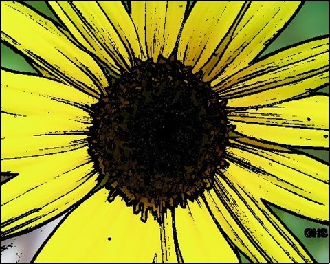 Sunflower Oil Painting Filter 5 Levels 30 Cartoon Threshold 30