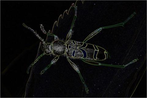 Wasp Scharr 3 x 3 x 8