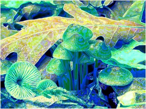 Mushroom: Green, Filter Size 9, Color Shift Left, Edge Tracing Double Intensity, Edge Threshold 60
