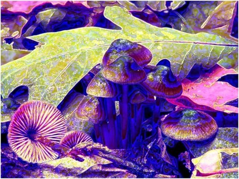 Mushroom: Red, Filter Size 9, Color Shift Right, Edge Tracing Double, Edge Threshold 60