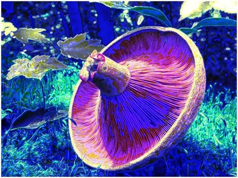 Mushroom: Green, Filter Size 11, Color Shift Left, Edge Tracing, Double Intensity, Edge Threshold 60