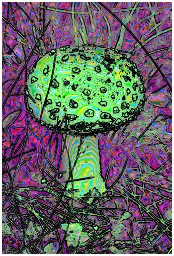 Mushroom: Green - Blue, Filter Size 17, Color Shift Left, Edge Tracing Black, Edge Threshold 85